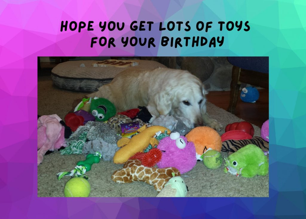 dog with lots of toys