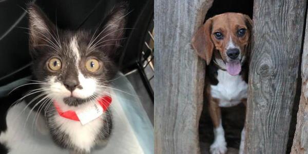 kitten and beagle