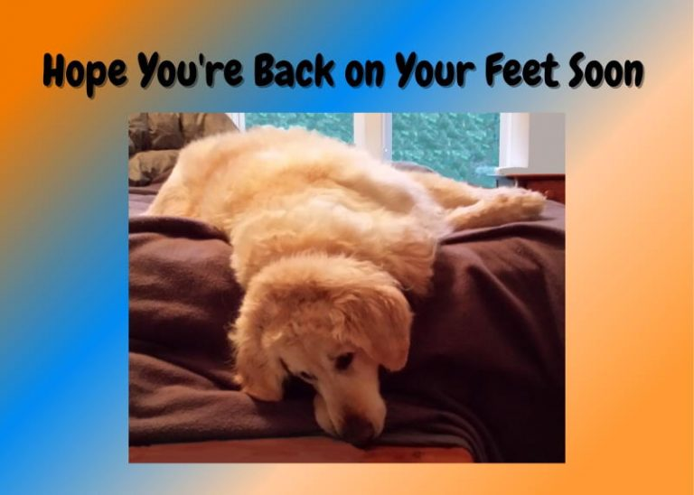 dog with head hanging off bed, caption is hope you're back on your feet soon