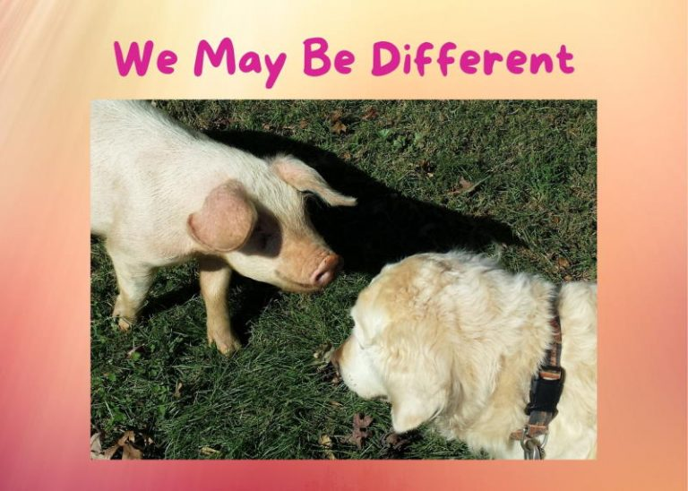 dog and pig nose to nose