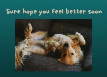 Sure Hope You're Feeling Better Soon