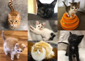 Kitties of Twin Counties