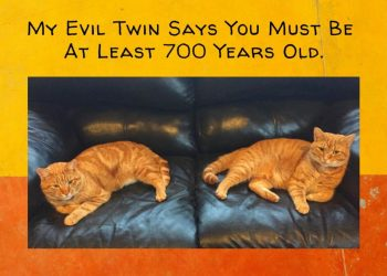 My Evil Twin says you must be 700 years old