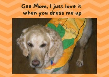 Halloween Gee Mom I just love it when you dress me up